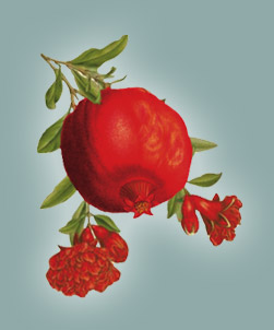 Pomegranate_Fruit_pic